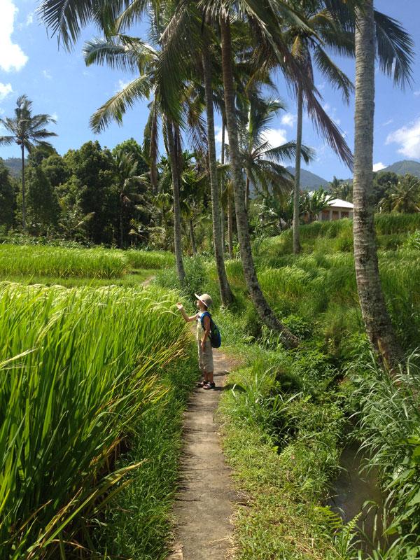 Мундук, остров Бали - зеленые холмы, пальмы и рисовые плантации.