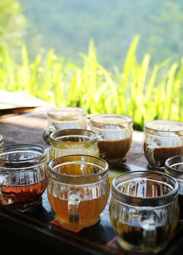 Дегустация кофе на кофейной плантации