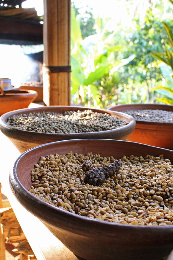 Кофе Luwak, кофейнаф плантация