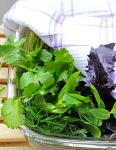 Свежая зелень - как сохранить ее в течении недели?
