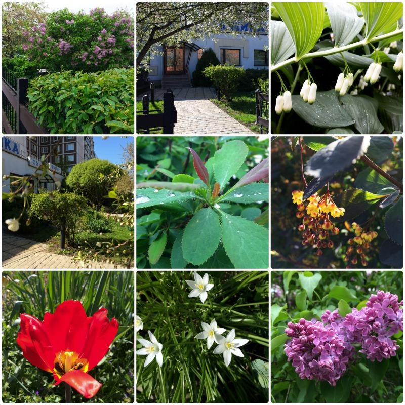 Цветы в Юмике, весенний коллаж