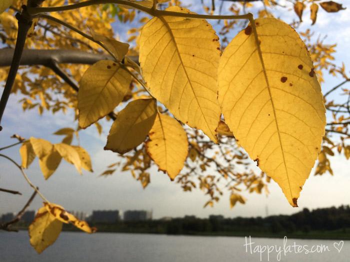 Осень в Москве, парк 850-летия