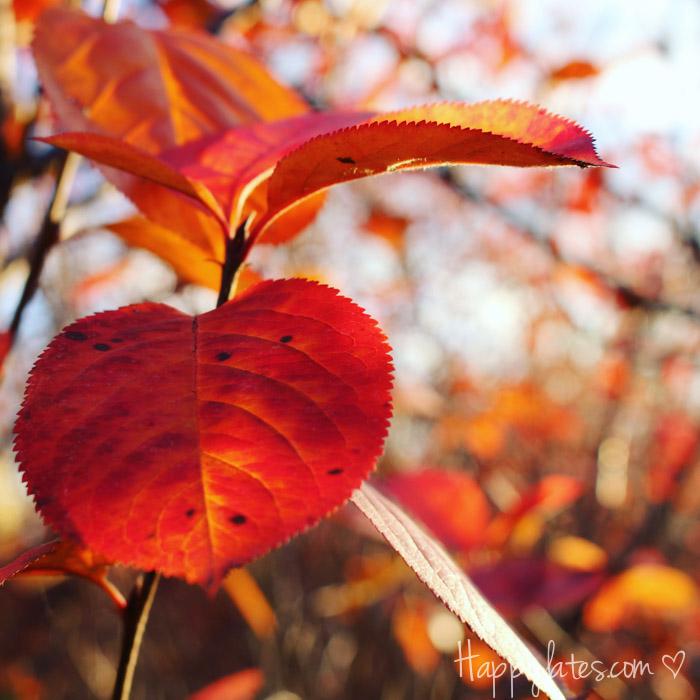 Осень в Москве, парк 850-летия, осенние листья