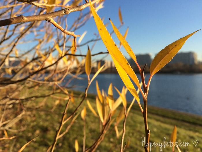 Осень в Москве, парк 850-летия, осенние листья, Москва-река